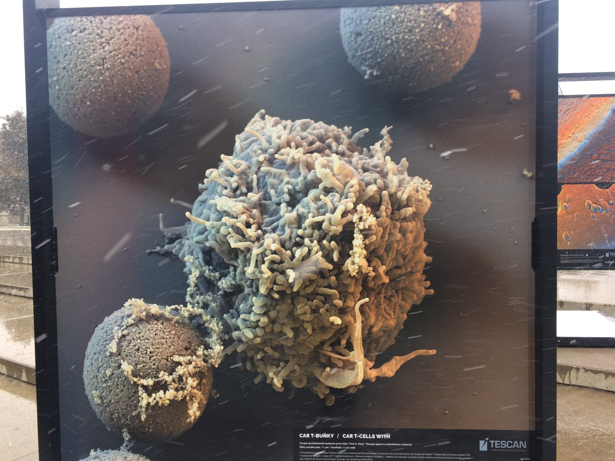 Car T-bunky pod elektrónovým mikroskopom