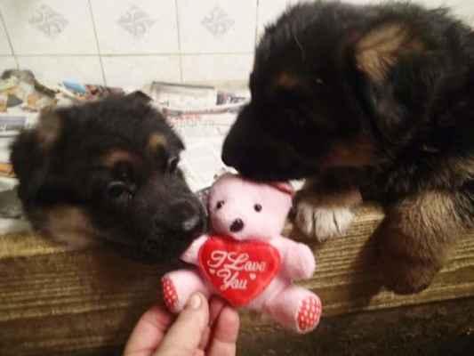 Dárek pro kluky na sv. Valentýna