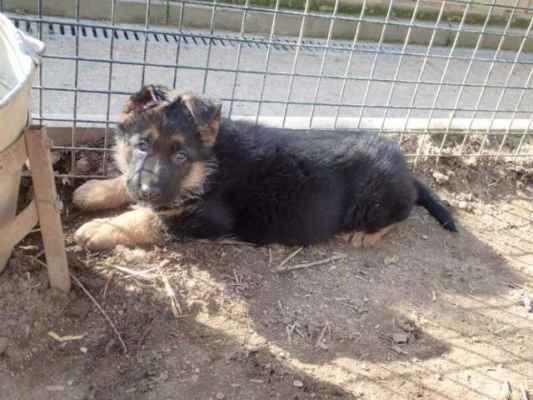 Kean si našel dolík pro odpočinek u psí vody.