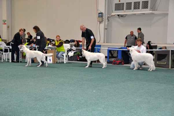 Dana vom Kiragrund, Skazka Iz Beloy Brigady a Walkiria Las Kornas - Female Puppy class