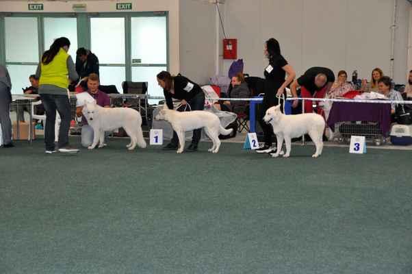 Walkiria Las Kornas, Dana vom Kiragrund a Amey Salli Sambatrae - Female Puppy class