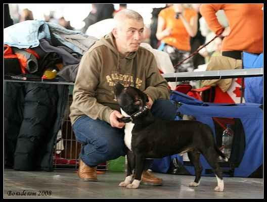 Brutus Na Kováni - Třída: mladých - psi