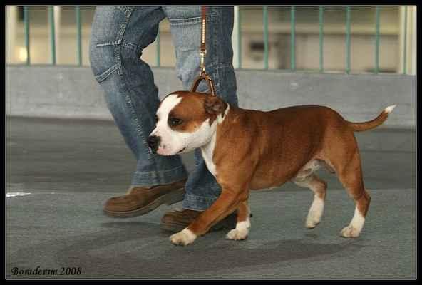 Bond Kerkin Bohemia - Třída: mladých - psi