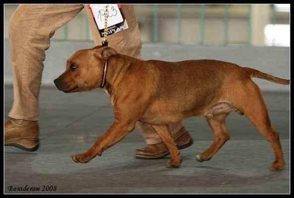 Dzhey Ti Dakkar Drive - Třída: mladých - psi