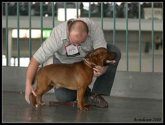 Baldrick z Aggami - Třída: mezitřída - psi