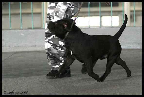Benny z Návrší - Třída: otevřená - psi