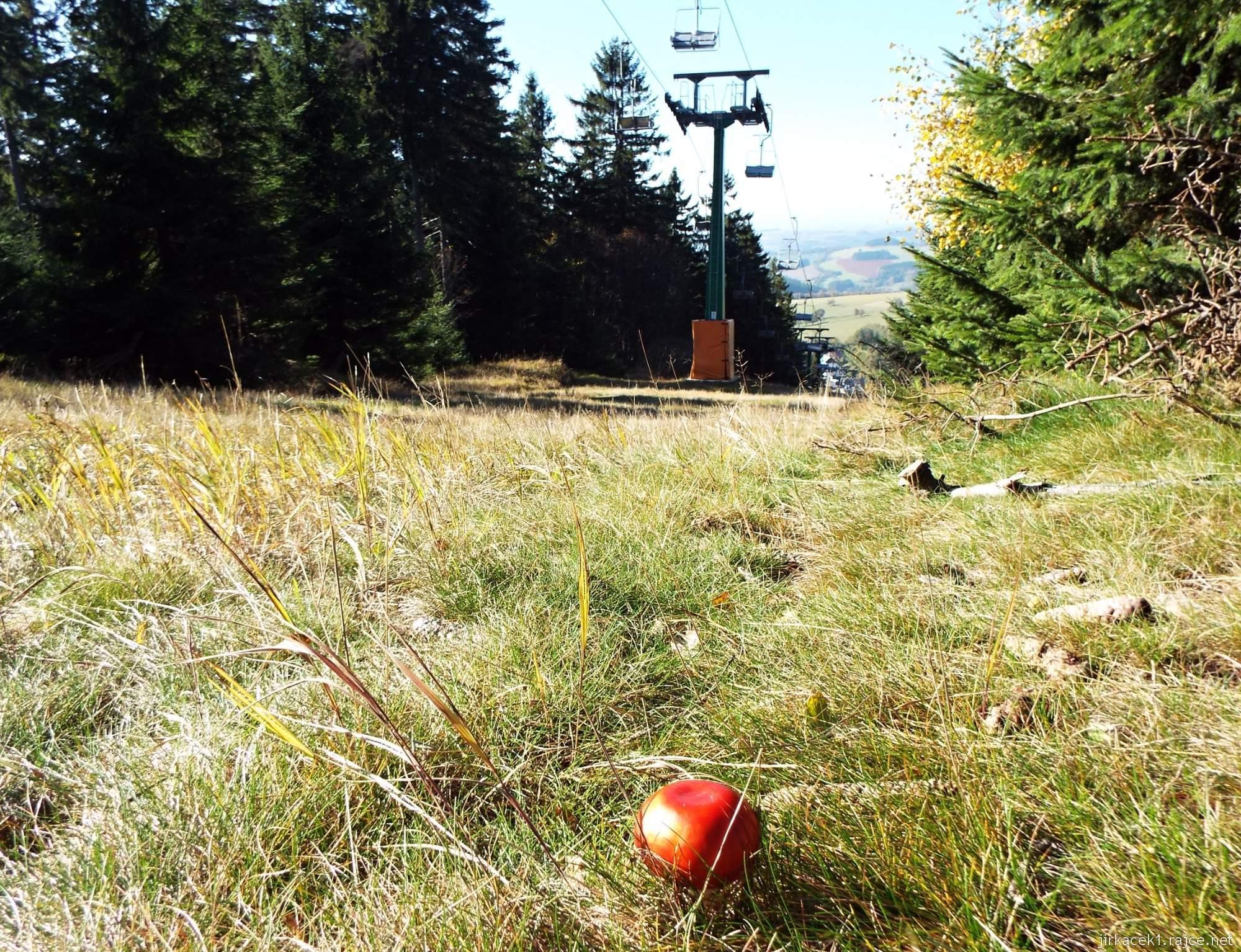 Čenkovice - houba u sjezdovky Třebovská a lanovka