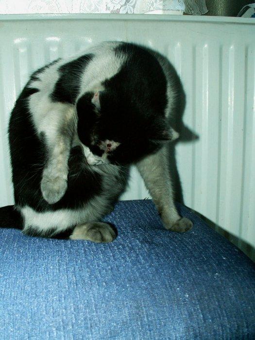 malá černá kočička pic