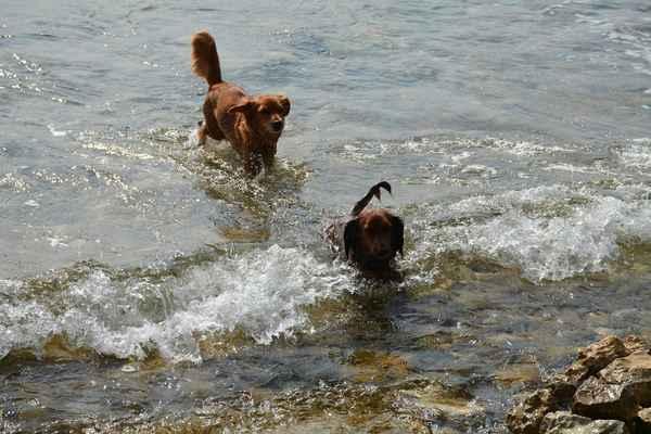 Agátka s Julinkou si ještě užívají plavání, večer budeme odjíždět domů.