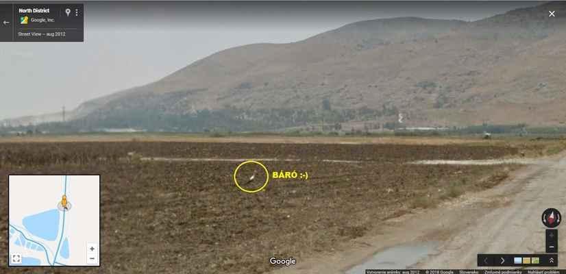 5: a na pole - nocovať (už bol v tejto oblasti v predchádzajúcich rokoch, v 2012/fotka ale ešte nebol sledovaný ;-) ) - https://goo.gl/maps/V2P9nHpeVZ62