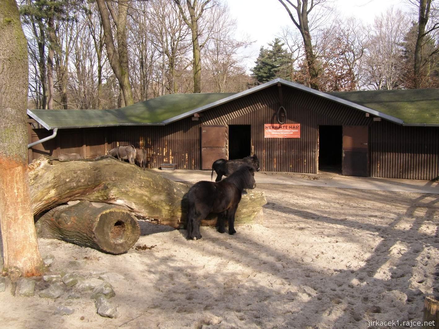 ZOO Ostrava 01 - Pony shetlandský