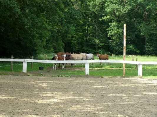 Horka nad Moravou - Lovecká chata - koně u chaty