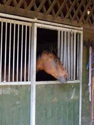 Horka nad Moravou - Lovecká chata - kůň ve stáji