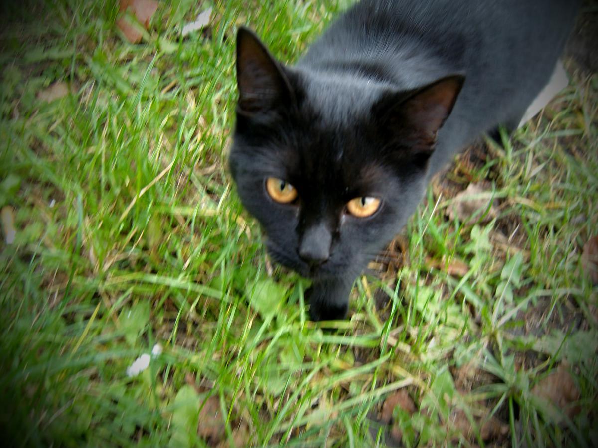 černá kočička divoká x videa velké ptáky