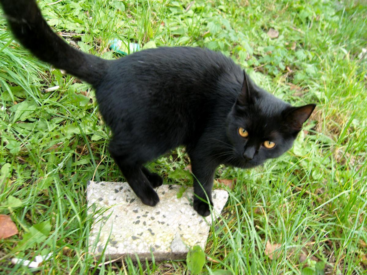 velká kořist milf kočička